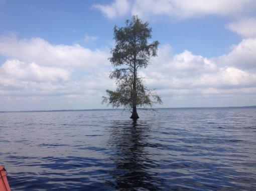 lone-tree-0829-112513